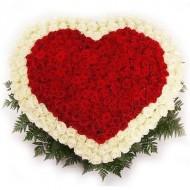 151 красно-белые розы в виде сердца